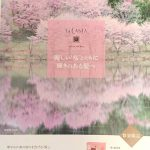La CASTA「みなも桜」販売!